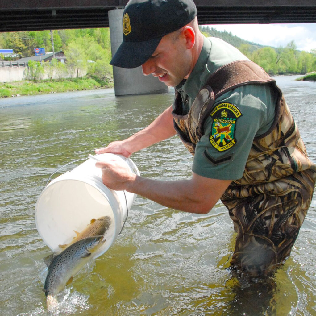 A Vermont Game Warden stocking fish in a river